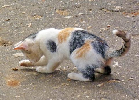 Котёнок и жучок - Александр Владимирович Серолапкин