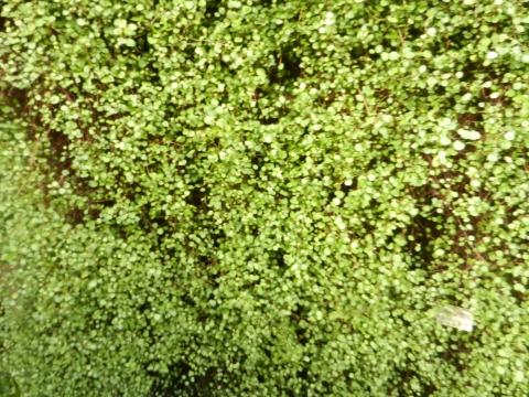 Хочется весны и зелени как в ботаническом саду. - Людмила Александровна Чупина